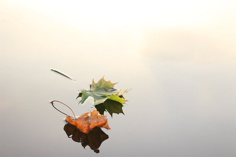Beautiful Free Autumn Wallpaper Desktop Backgrounds Vandelay Design